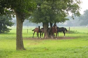 feature-producten-paarden-in-weiland